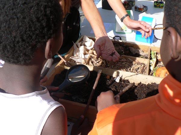 Les enfants sont fascinés par les petites bêtes du compost.