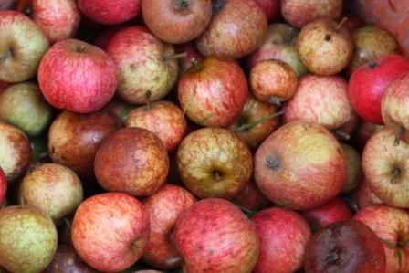 pommesacidre